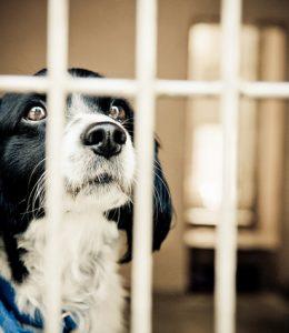 fhm-dog-jail