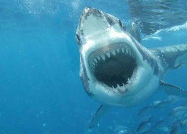 fhm-shark-teeth
