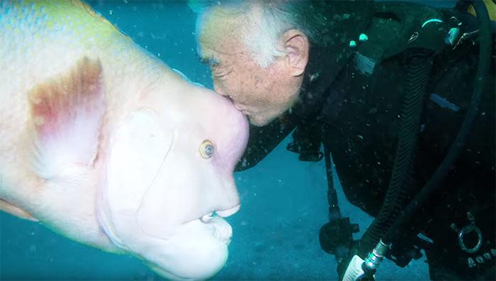 japanse duiker vrienschap vis