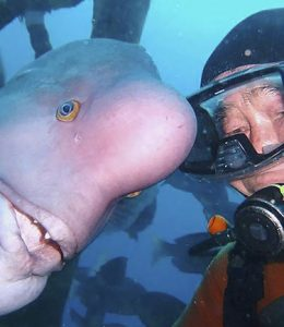 japanse duiker vriendschap vis