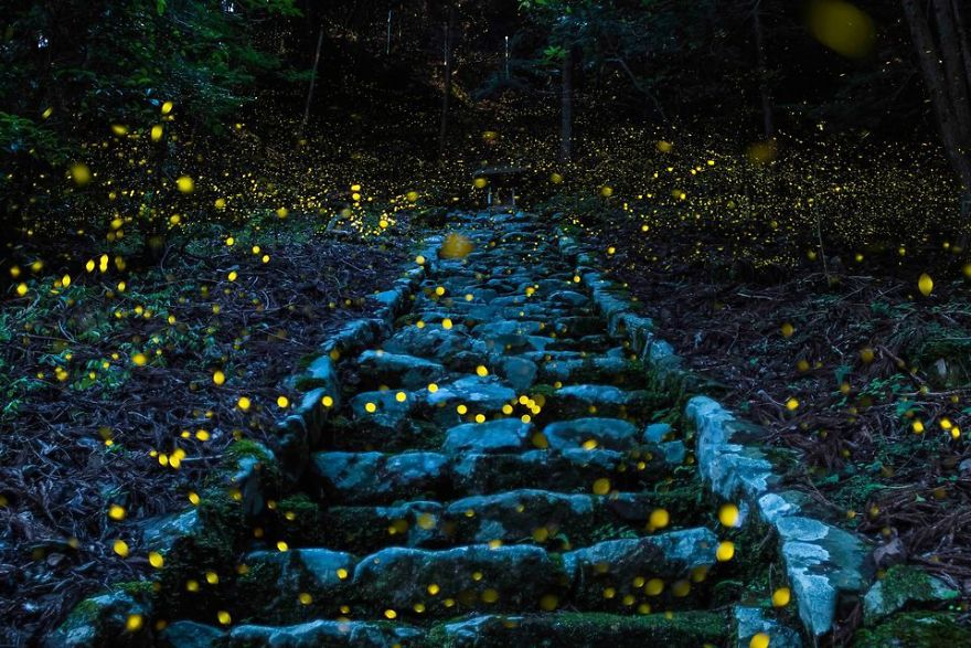 Shooting in the forest. (Photo And Caption By Y. TAKAFUJI / National Geographic Travel Photographer Of The Year Contest)