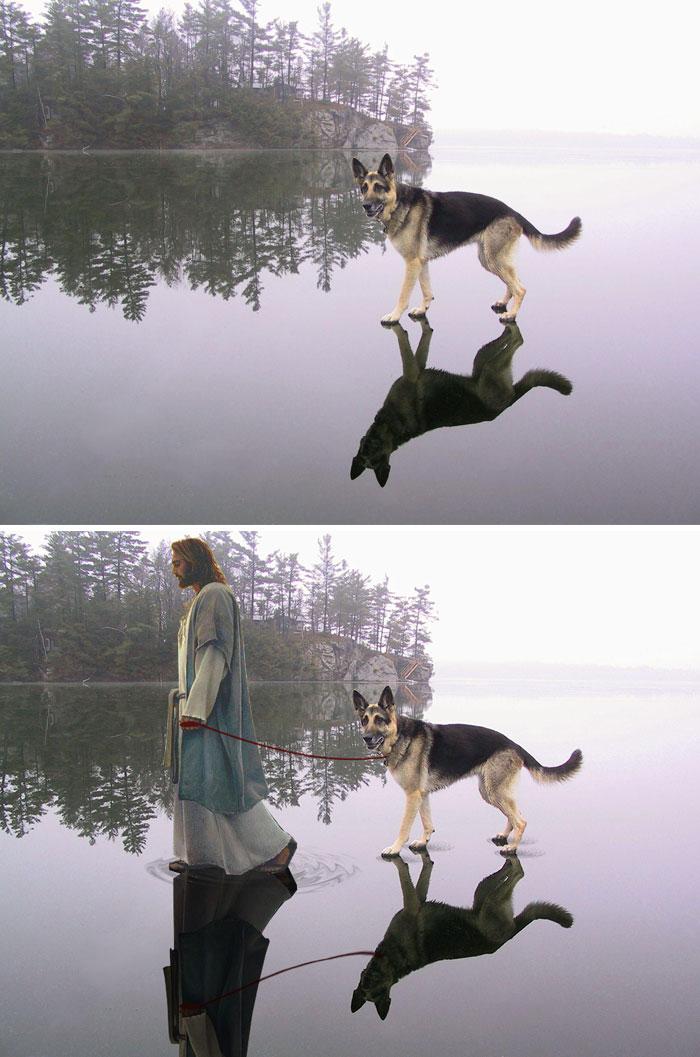 Duitse herder op het ijs - by Smilodon-Fatalis
