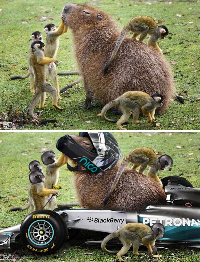 Capybara met wat aapjes - by SteveT2112