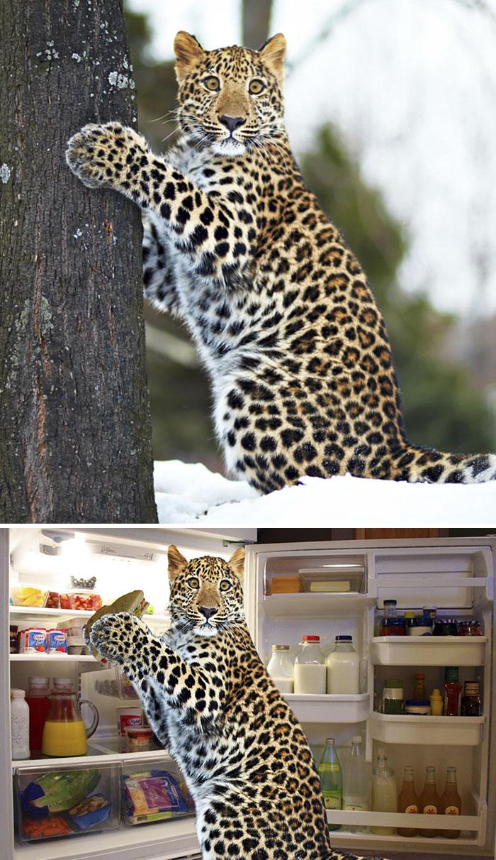 Schuldige luipaard - by Duderino732