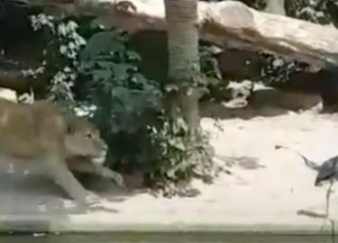 Reiger Leeuwen Artis