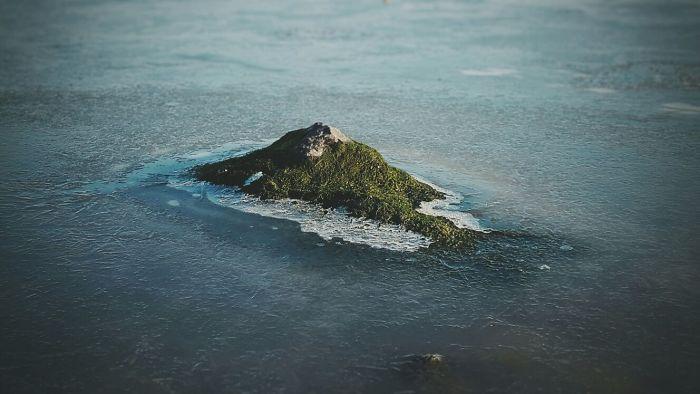 Tropisch mos eiland op een steen.