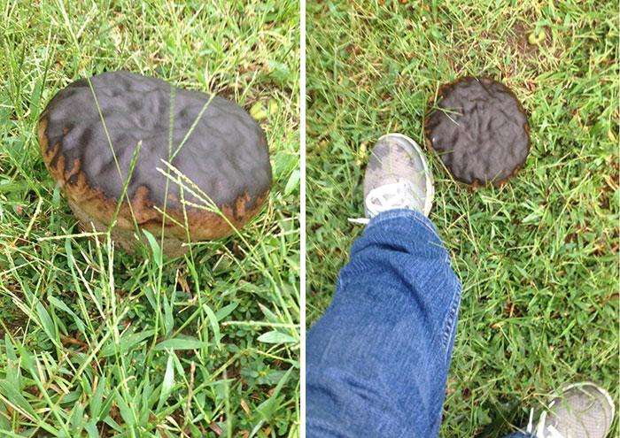 Donut paddenstoel.