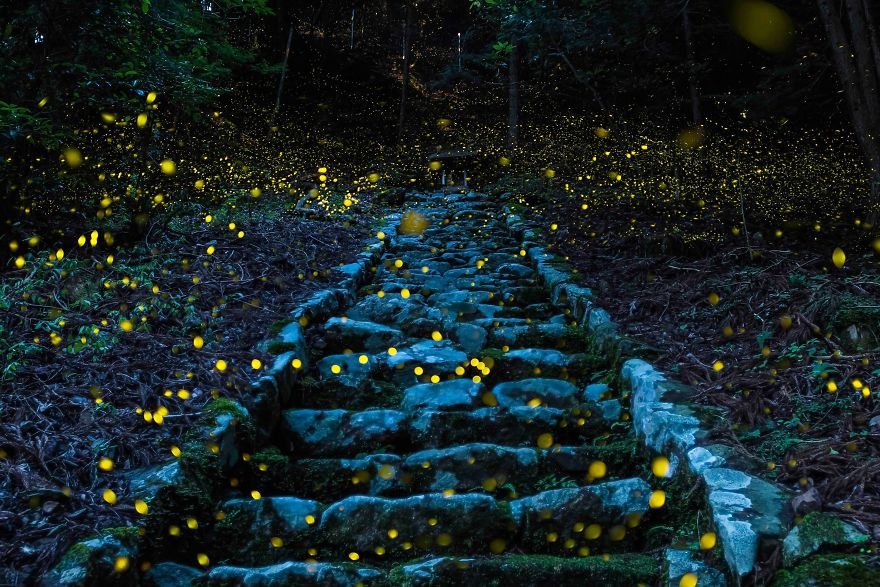 Forest Of The Fairy, Tamba, Japan.