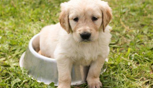 Hondencafé