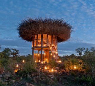 Bird's Nest Kenya