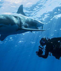 witte haai zwembad