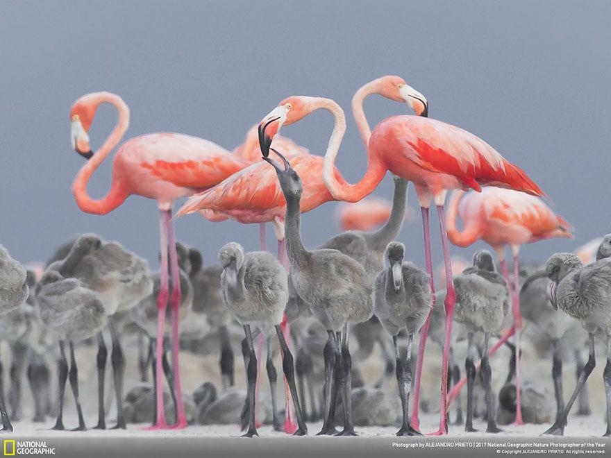 Foto: National Geographic , Alejandro Prieto