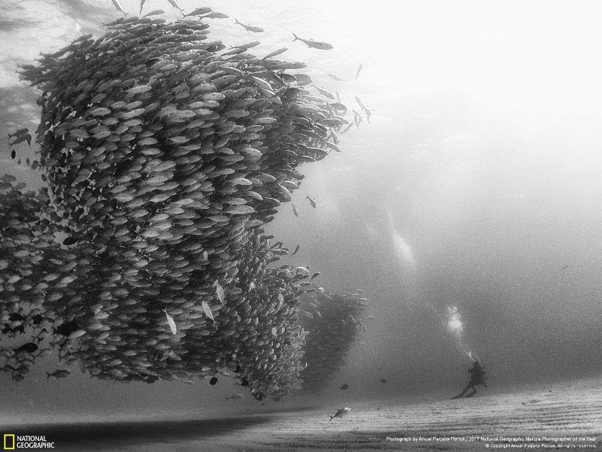 Foto: National Geographic , Anuar Patjane Floriuk