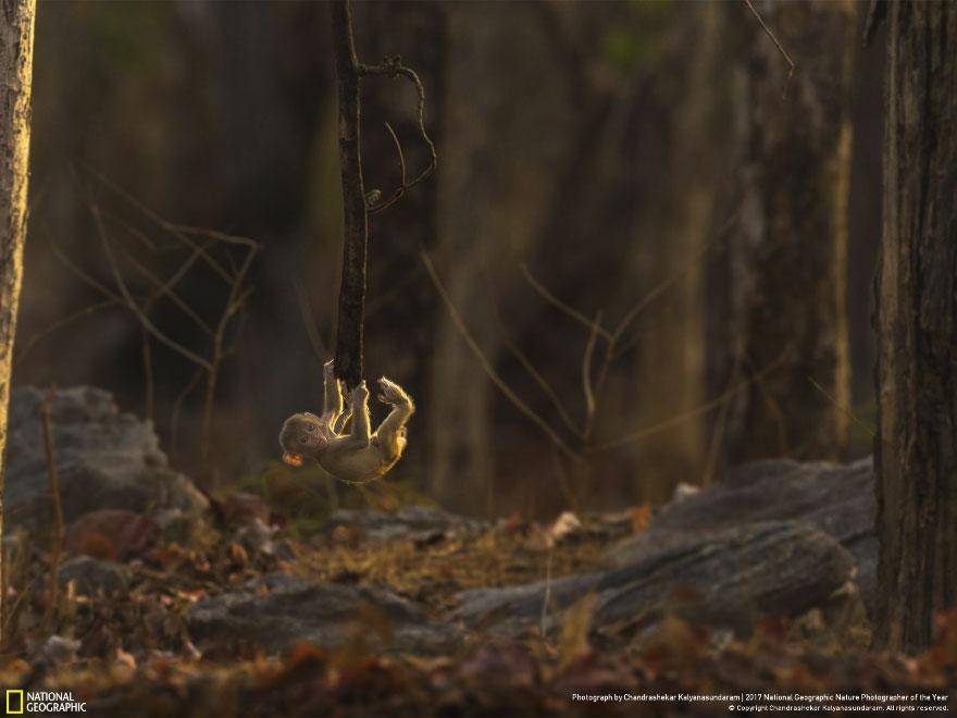 Foto: National Geographic , Chandrashekar Kalyanasundaram