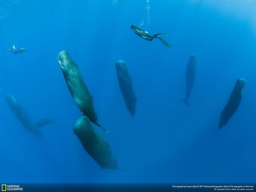 Foto: National Geographic , Franco Banfi