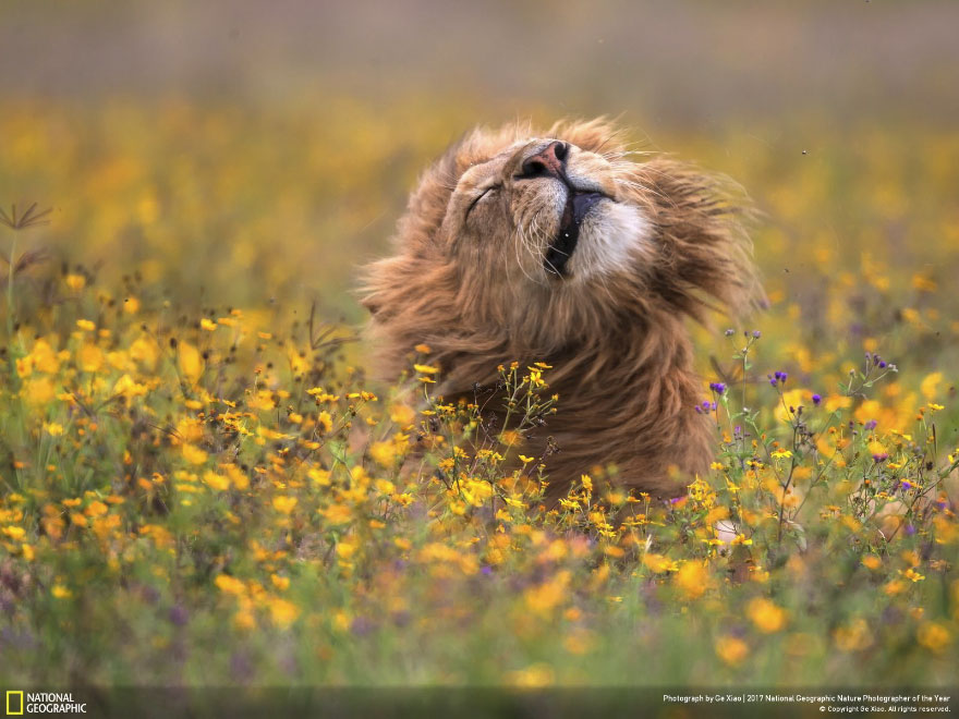 Foto: National Geographic , Ge Xiao Report