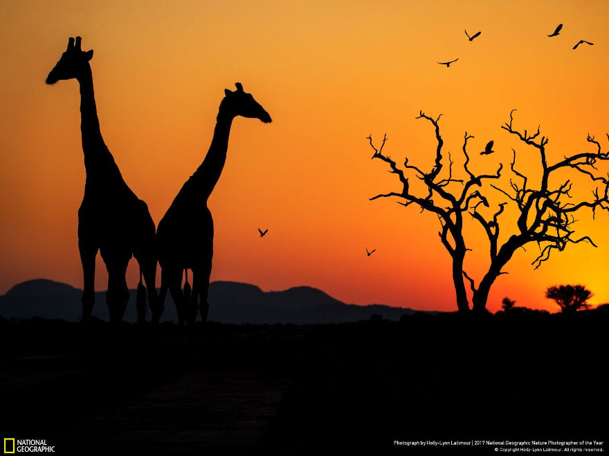 Foto: National Geographic , Holly-Lynn Latimour