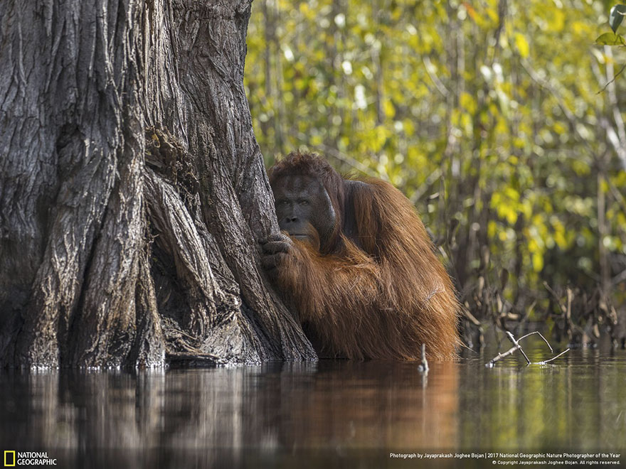 Foto: National Geographic , Jayaprakash Joghee Bojan