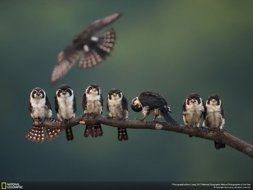 Foto: National Geographic , Kant Liang