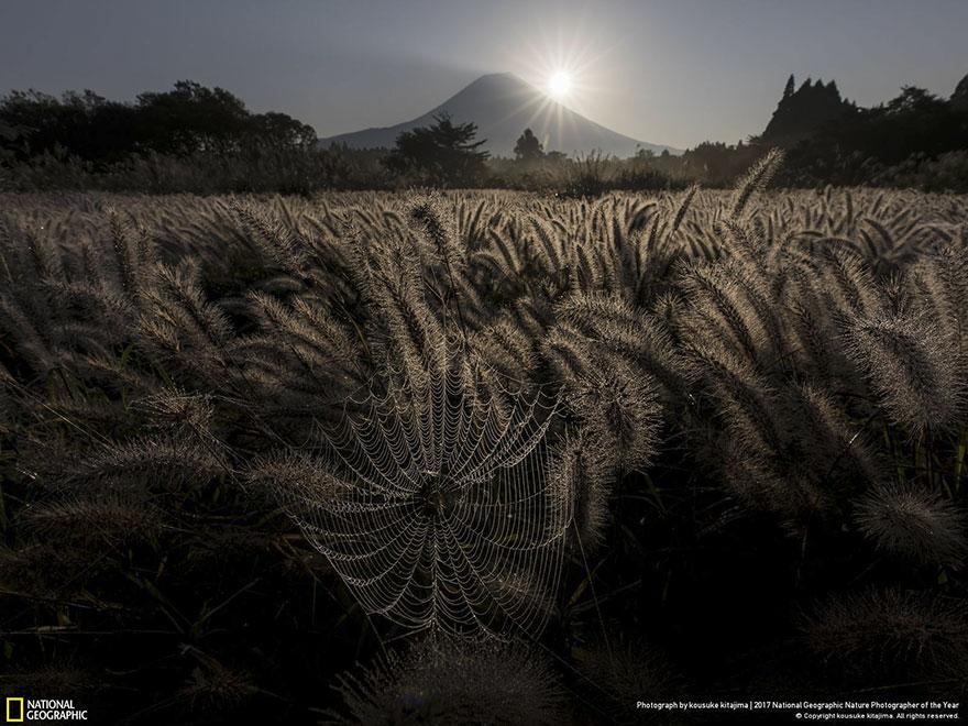 Foto: National Geographic , Kousuke Kitajima