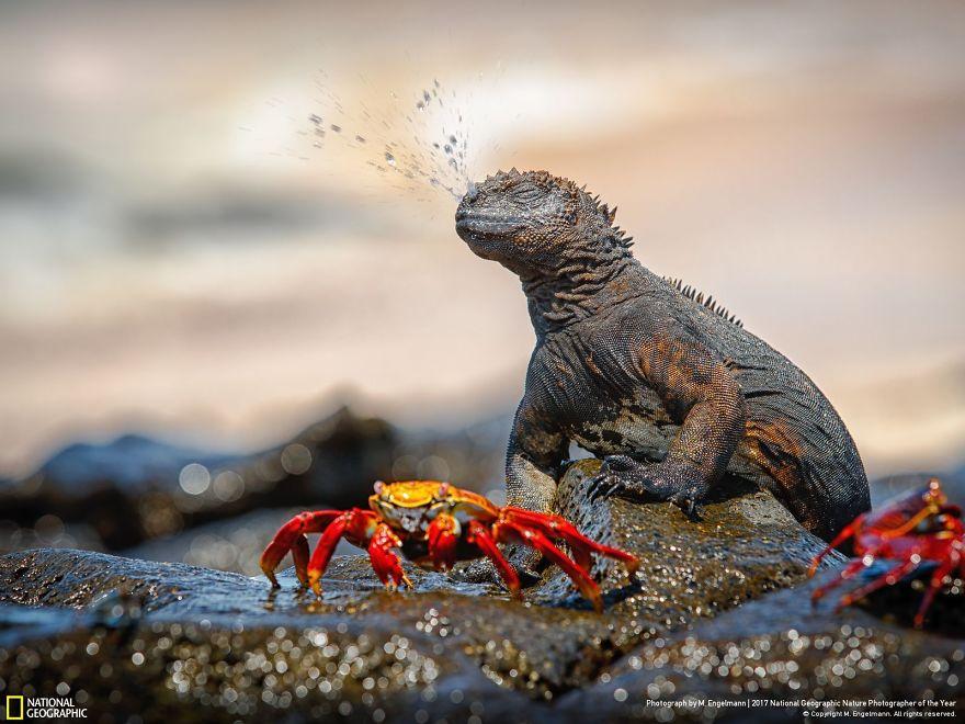 Foto: National Geographic , M. Engelmann