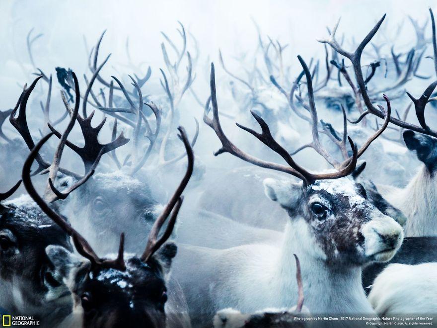 Foto: National Geographic , Martin Olson