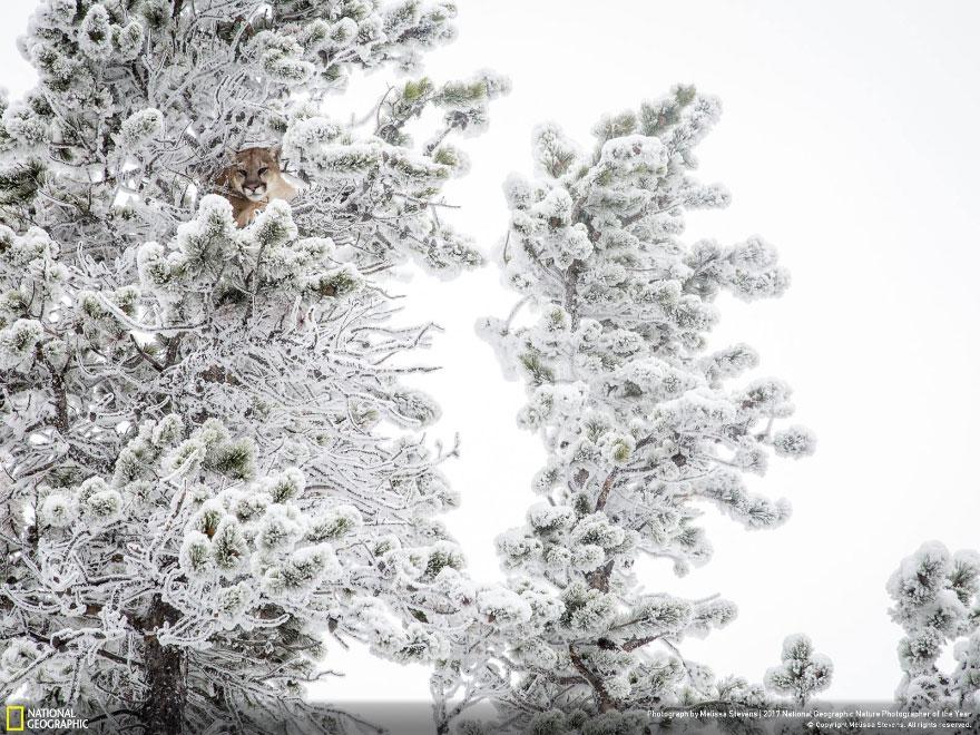 Foto: National Geographic , Melissa Stevens