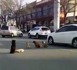 Ongeluk honden