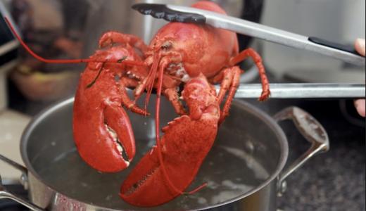 Zwitserland verbied kreeft levend koken