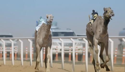 Koning Abdulaziz Camel Festival