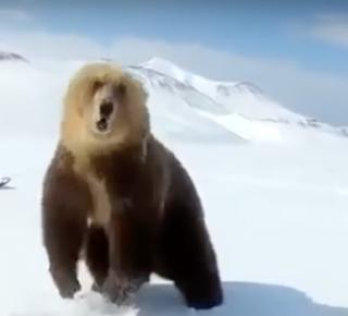 sneeuwscooters bruine beer