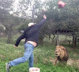 Hongerige leeuw