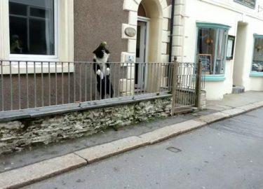 Hond speelt met voorbijgangers