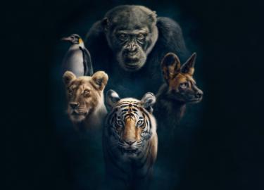 BBC Natuur film Sir David Attenborough