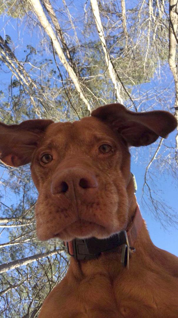 Foto hond selfie