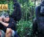 gorilla's gorilla