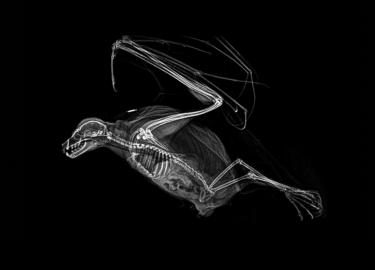 röntgenfoto's dieren