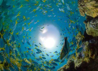 GoPro Oceaan