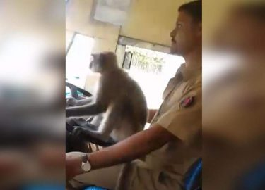 Aap bus india