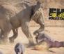 olifanten nijlpaard