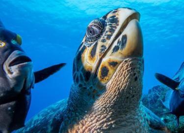 Onderwaterwereld zeedieren schildpad