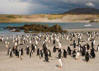 pinguïns pebble eiland