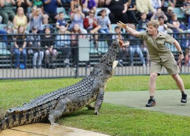 Zoon Steve Irwin Robert Irwin